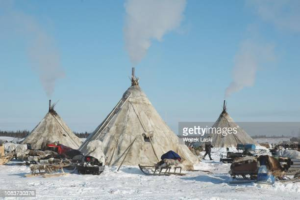 Nenets hamlet near Nadym YamaloNenets Autonomous Okrug Russia on 15th 2008 The Nenets are nomad tribes living with their herd of reindeers that give...