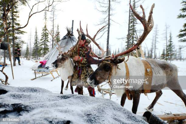 nenets herder with reindeer - cliqueimages stock pictures, royalty-free photos & images