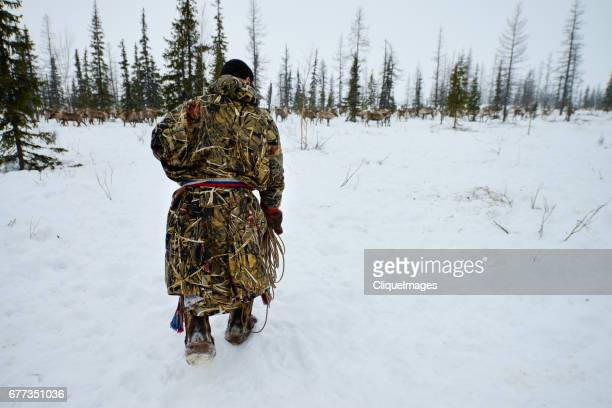 nenets man herding reindeer in forest - cliqueimages stock pictures, royalty-free photos & images