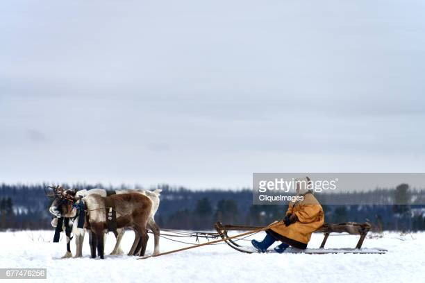 nenets reindeer herder on sleigh - cliqueimages stock pictures, royalty-free photos & images