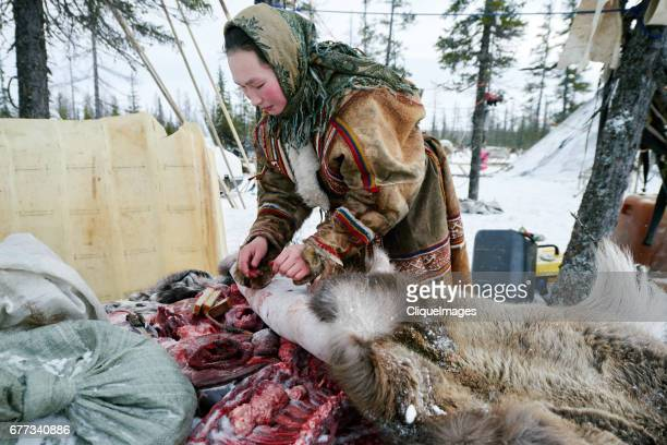 nenets woman with raw reindeer meat - cliqueimages stock pictures, royalty-free photos & images