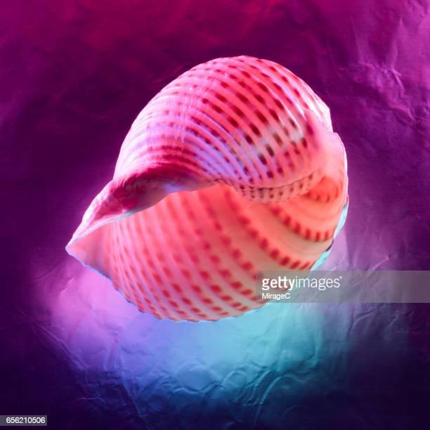 Neon Colored Seashells
