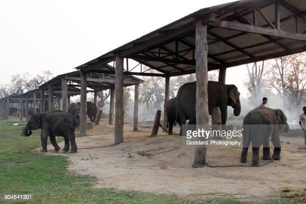 Nepal: Elephant Breeding Centre at Bharatpur