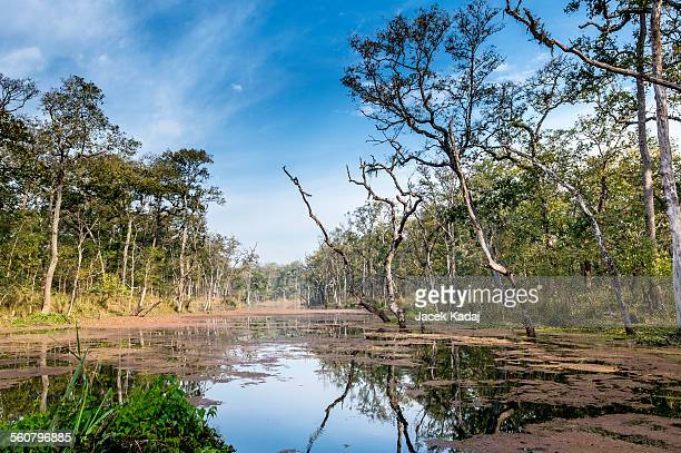 nepal jungle (chitwan) - chitwan stock pictures, royalty-free photos & images