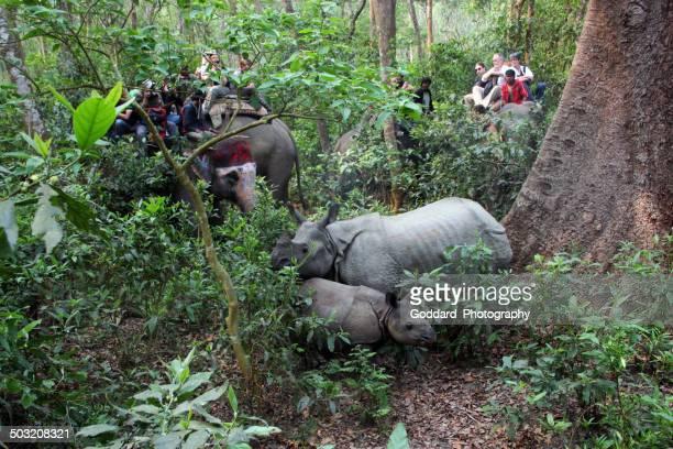 Nepal: Rhino at Chitwan National Park