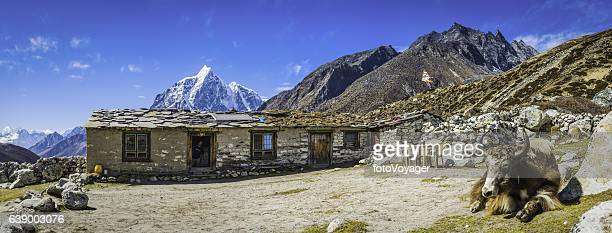 Nepal yak outside Sherpa teahouse high in Himalayan mountains panorama