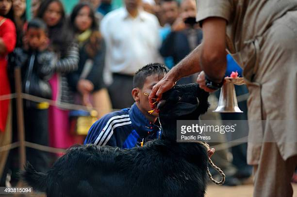 Nepalese army personnel offering puja before slaughtering a goat on the occasion of Navami 9th day of Dashain Festival at Basantapur Durbar Square...