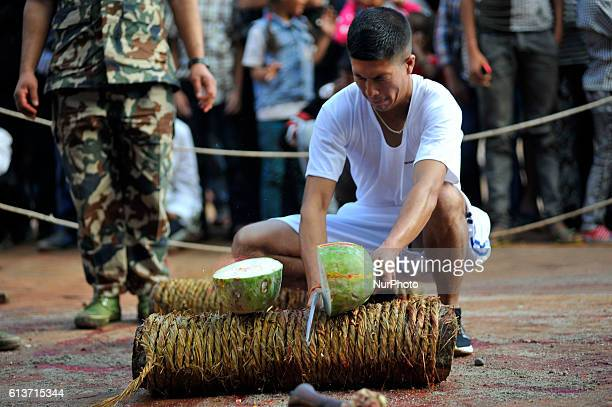 A Nepalese devotee cutting melon as the procession on the occasion of Navami ninth day of Dashain Festival at Basantapur Durbar Square Kathmandu...