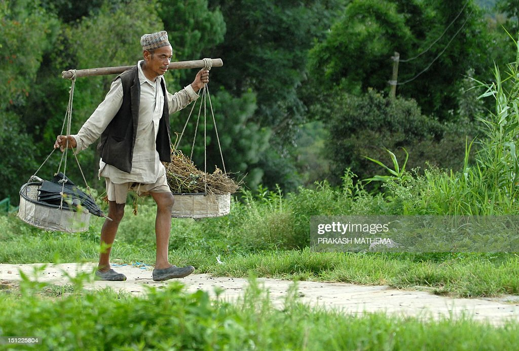 A Nepalese farmer walks from his paddy field to his home in the village of Khokana, on the outskirts of Kathmandu on September 4, 2012. Over 80 percent of Nepal's 27 million population depends upon agriculture and paddy is the major crop in the Himalayan nation. AFP PHOTO/Prakash MATHEMA