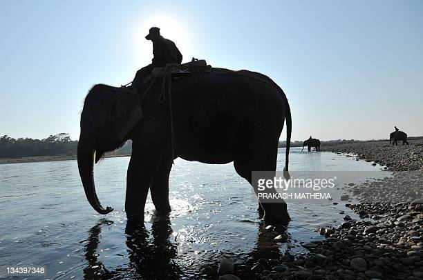 Nepalese mahouts cross the Rapati river with their elephants while they return after playign elephant polo at Meghauly in Chitwan District, some 200...