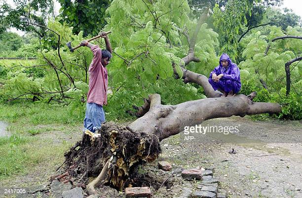 A Nepalese man wields an axe watched by another man as he prepares to chop a trunk of a tree uprooted by a severe storm in order to clear a road at...
