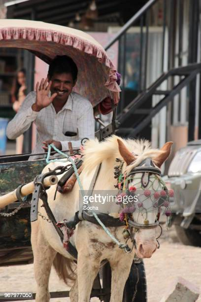 nepalese man with horse cart, chitwan, nepal - terai stock pictures, royalty-free photos & images