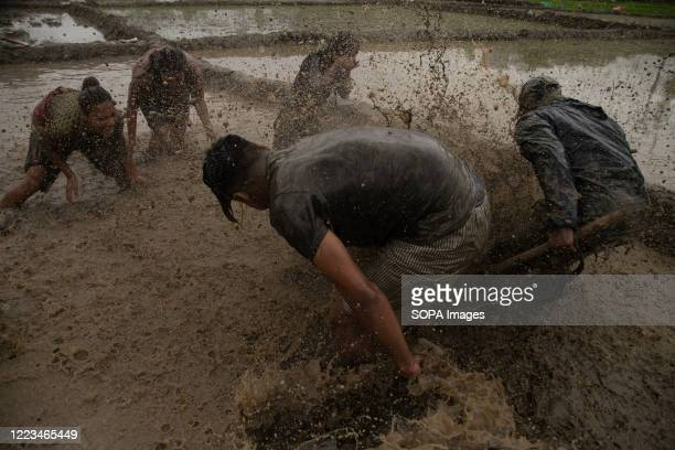 Nepalese People are seen playing in the mud as they plant rice seedlings at a paddy field during the National Paddy Day. Farmers celebrate the...