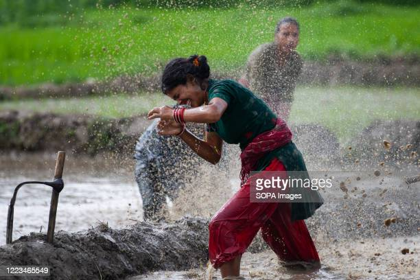 Nepalese People are seen playing in the mud as they plant rice seedlings at a paddy field during the National Paddy Day, Farmers celebrate the...