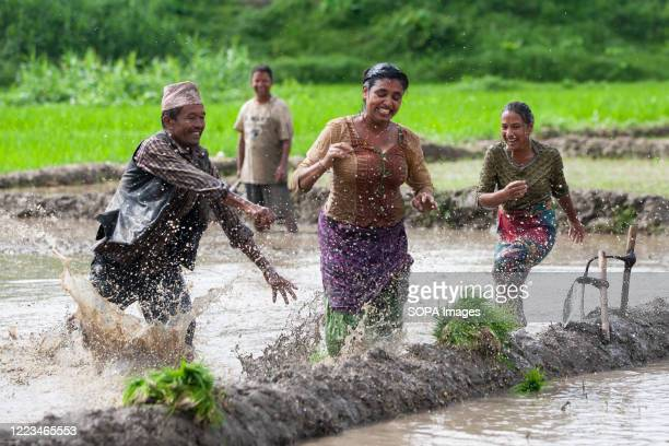 Nepalese People are seen playing in the mud as they plant rice seedlings at a paddy field during the National Paddy Day Farmers celebrate the...