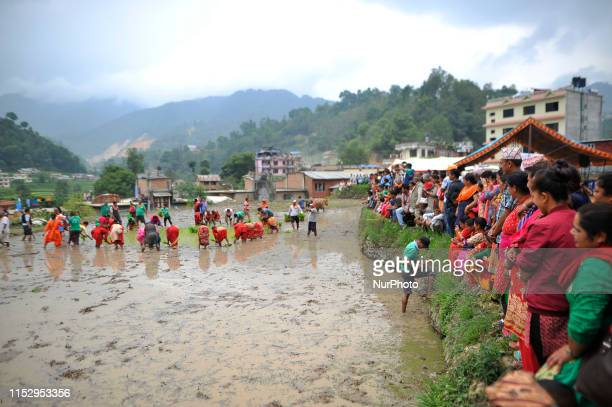 Nepalese people observing the rice plantation at Lele Lalitpur Nepal on Sunday June 30 2019 Nepalese people celebrates Rice Plantation Celebration on...