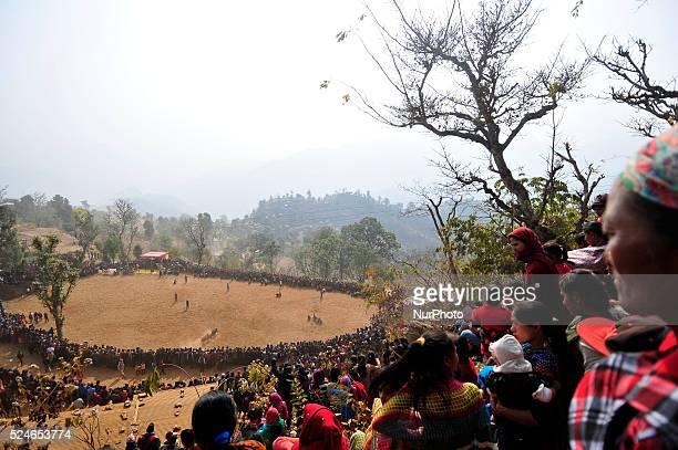 Nepalese people watching a bull fight during the Makar Sankranti or Maghe Sangranti festival at Taruka village Nuwakot 80km north of Kathmandu Nepal...