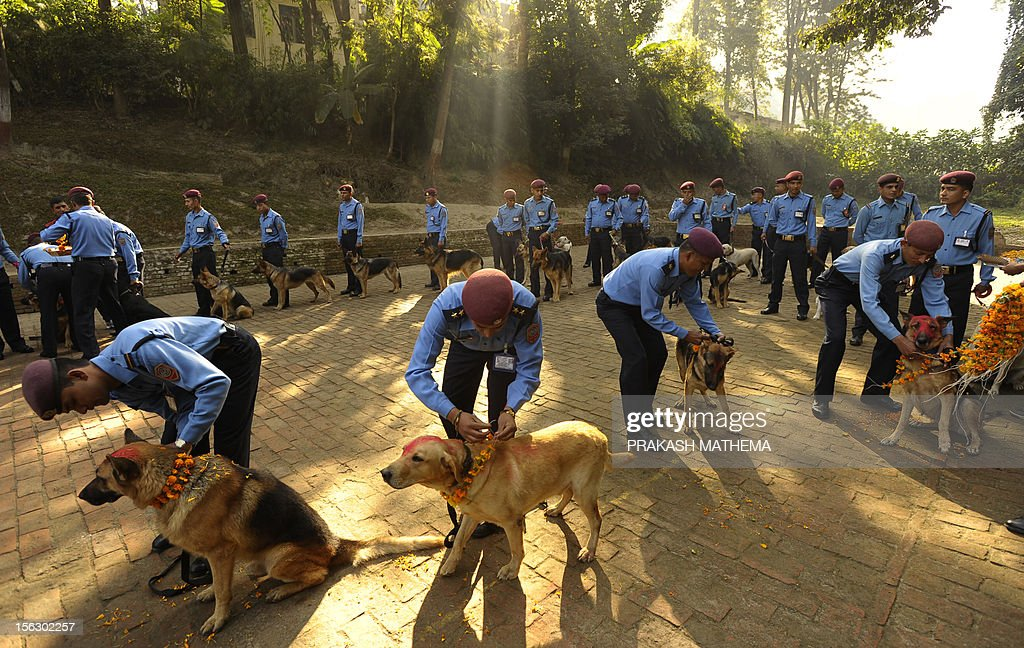 Nepalese police officers garland dogs after applying vermillion to their foreheads on the occasion of the Tihar festival in Kathmandu on November 13, 2012. On Tihar, as the Hindu festival of Diwali is locally known, it is customary in Nepal for people offer blessings to dogs, which are according to Hindu tradition, the messengers of Yamaraj, the god of death. AFP PHOTO/ Prakash MATHEMA