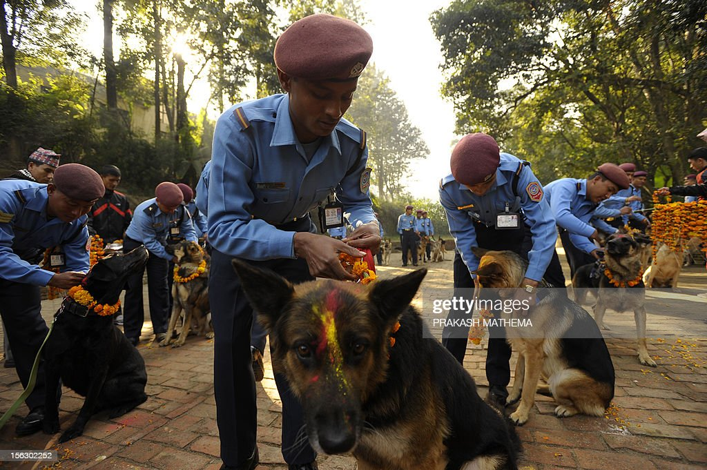 Nepalese police officers garland their dogs after applying vermillion to their foreheads on the occasion of the Tihar festival in Kathmandu on November 13, 2012. On Tihar, as the Hindu festival of Diwali is locally known, it is customary in Nepal for people offer blessings to dogs, which are according to Hindu tradition, the messengers of Yamaraj, the god of death. AFP PHOTO/Prakash MATHEMA
