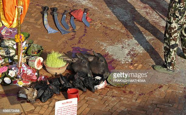 Nepalese soldiers stand alongside the heads of sacrificial goats and buffalo during the Hindu Dashain Festival in Kathmandu on October 3 2014 Dashain...