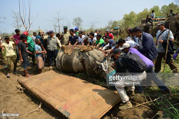 A Nepalese veterinary and technical team prepare a sedated rhino before it is relocated in Chitwan National Park some 250 kms south of Kathmandu on...
