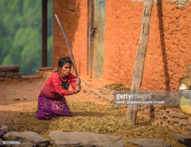 nepalese woman working - threshing stock photos and pictures