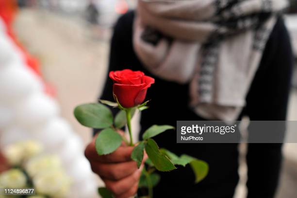 A Nepalese youth select rose for the celebration on Valentine's Day at Durbarmarg Kathmandu Nepal on Thursday February 14 2019 Flower shops in the...
