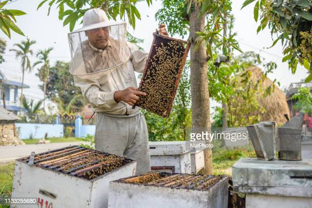 A Nepali beekeeper inspects beehives at a bee farm in Sauraha Chitwan National Park Nepal on March 25 2019