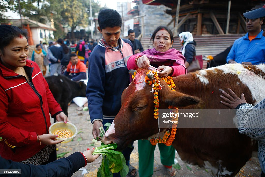"Nepali devotees worship cow during the Gai puja cow worship day as part of Tihar festival in Kathmandu, Nepal, October 30, 2016. ""Tihar"", the festival of lights, is celebrated for five days. Each day is dedicated to different religious figures including crow, and dog, cow which signifies deep relation between human beings, god, and animals."