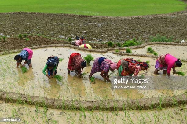 Nepali farmers plant rice in paddy fields aduring National Paddy Day in Lele village on the outskirts of Kathmandu on June 29 2018 Farmers in Nepal...