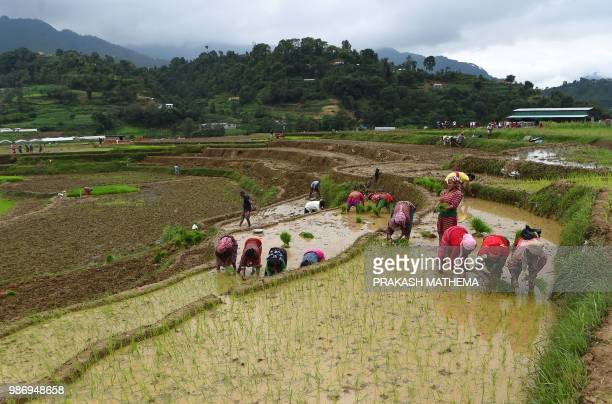 Nepali farmers plant rice in paddy fields during National Paddy Day in Lele village on the outskirts of Kathmandu on June 29 2018 Farmers in Nepal...