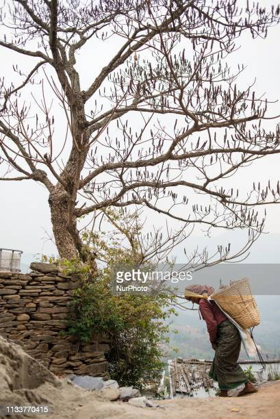Nepali woman carrying a basket with stones in Bandipur Nepal on March 30 2019