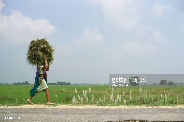 nepali women carrying load, lumbini area, terai range - terai stock pictures, royalty-free photos & images