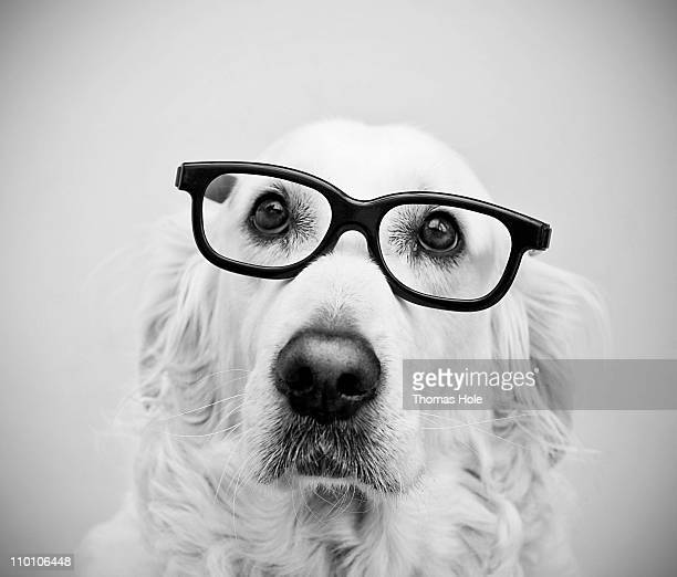 nerd dog - thick rimmed spectacles - fotografias e filmes do acervo