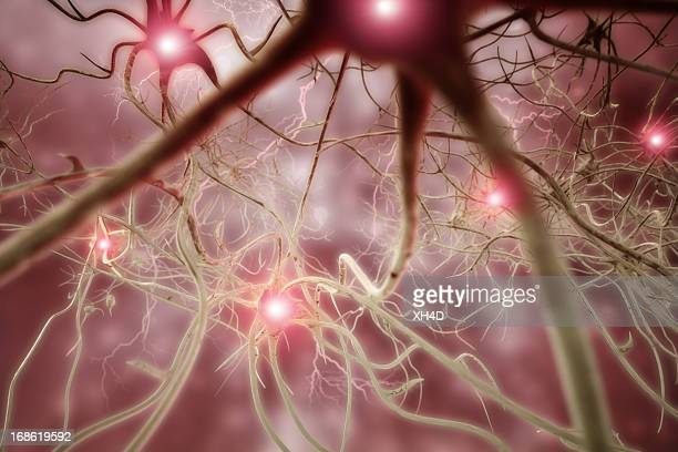 Nerve Cell 3D Biomedical Illustration
