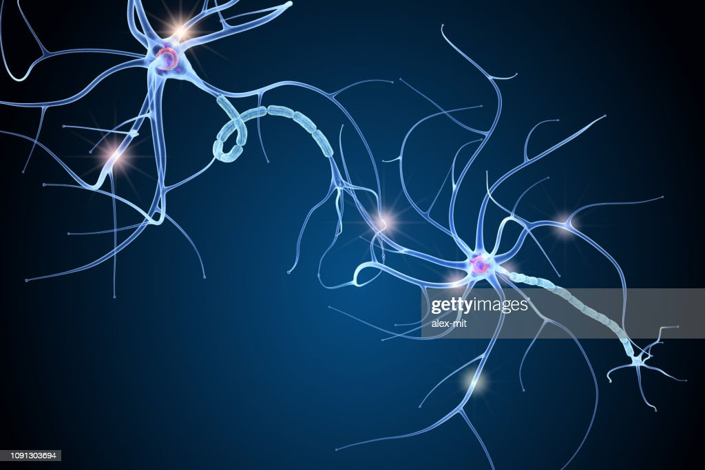Nerve cell anatomy in details. 3D illustration : Stock Photo