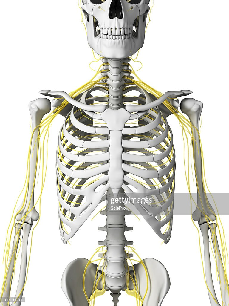 nerves : Stock Photo
