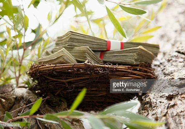 Nest filled with cash in tree, horizontal