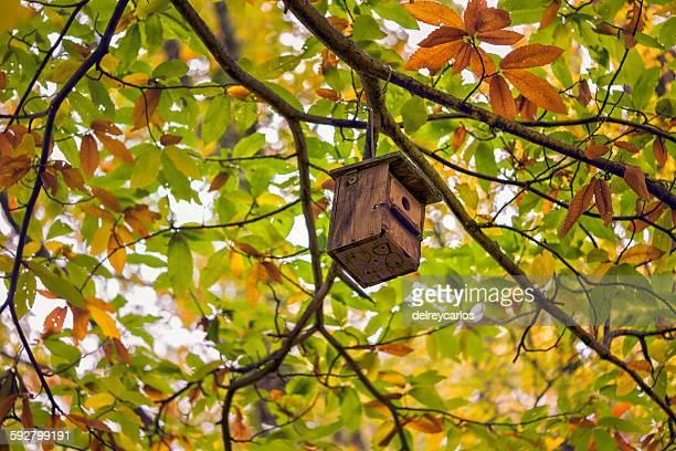 nest in the tree - stadio olimpico nazionale foto e immagini stock