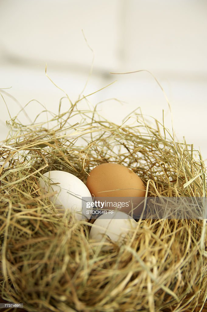Nest made of straw with eggs, close-up : Photo