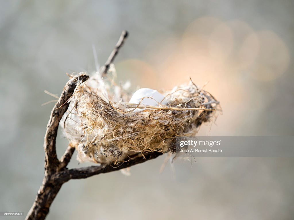 Nest of bird on a branch : Stock Photo