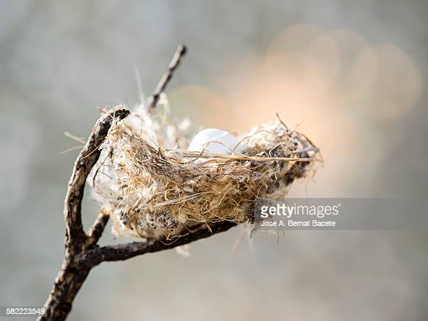 Nest of bird on a branch