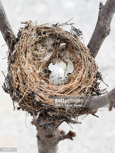 Nest of bird with an egg I rotate on the branch of a tree
