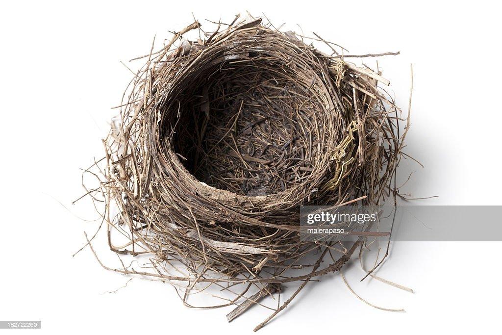 Nest : Stock Photo