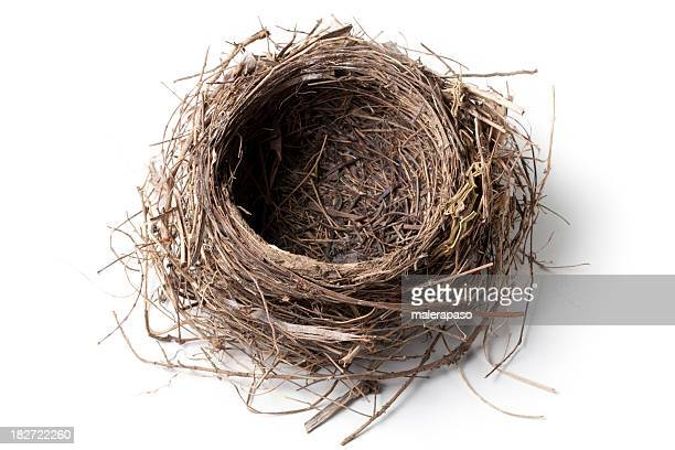 nest - birds nest stock photos and pictures