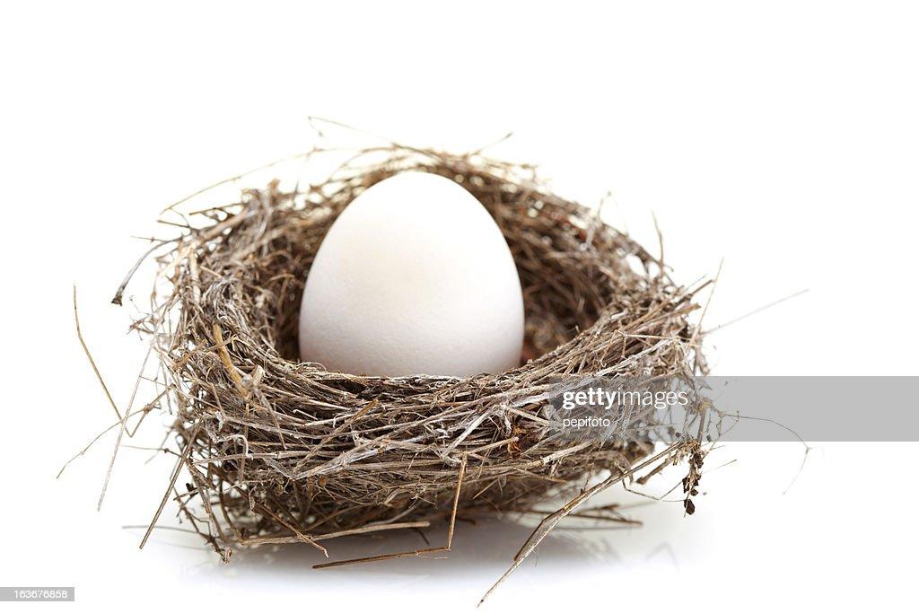 Ninho com ovo : Foto de stock