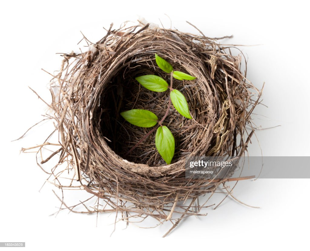 Nest with green twig : Stock Photo