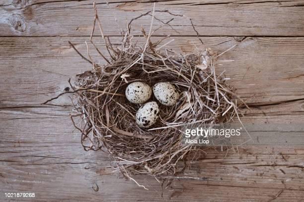 nest with three eggs - 少数の物 ストックフォトと画像