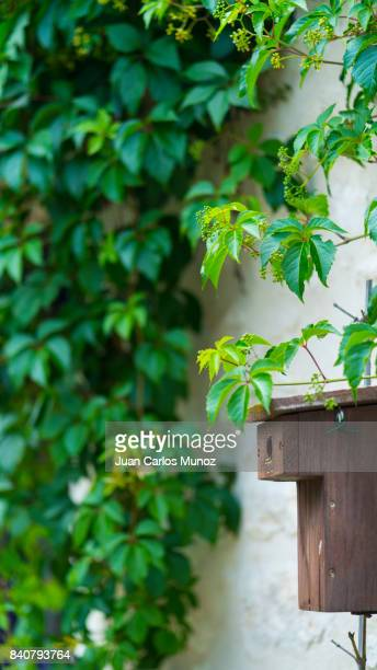nesting box in chedigny garden-village, indre-et-loire department, the loire valley, france, europe - chedigny photos et images de collection