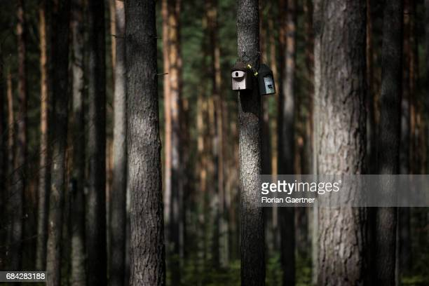 Nesting boxes on a tree shot in a forest on April 11 2017 in Gross Doelln Germany